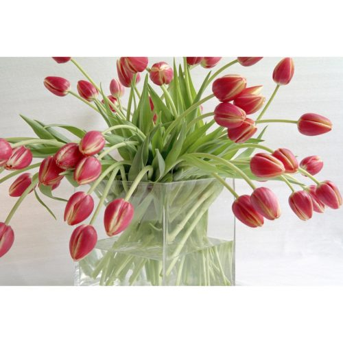 rote Tulpen in Vase