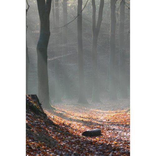Herbstwald mit Stein