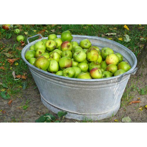 Äpfel in Zinkwanne