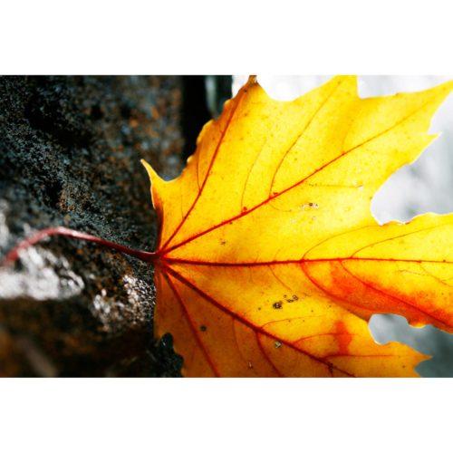 gelbes Herbstblatt