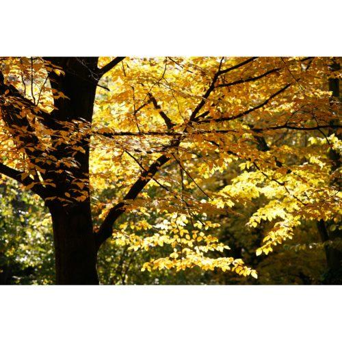 Baum Herbstlaub