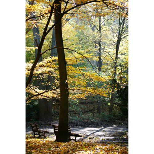 Herbstwald mit Bank