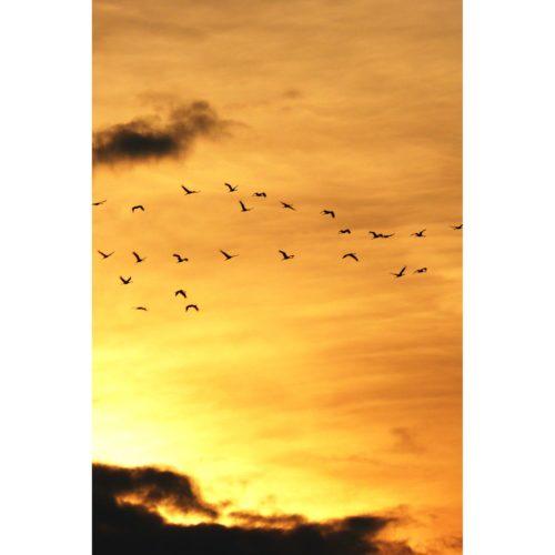 Sonnenuntergang Kraniche