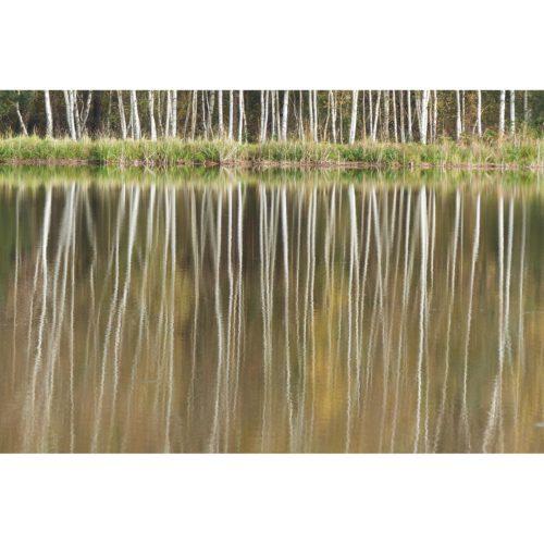 Bäume spiegeln im Wasser