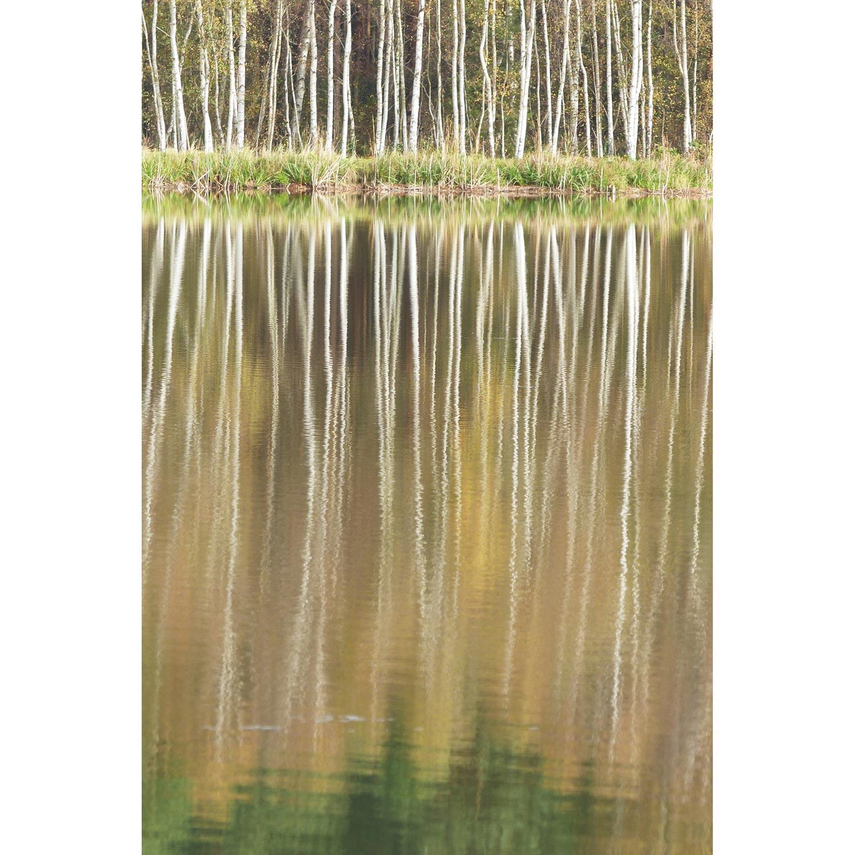 Birken spiegeln im See