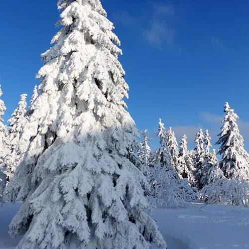 Grußkarten-Fotomotive-Winter