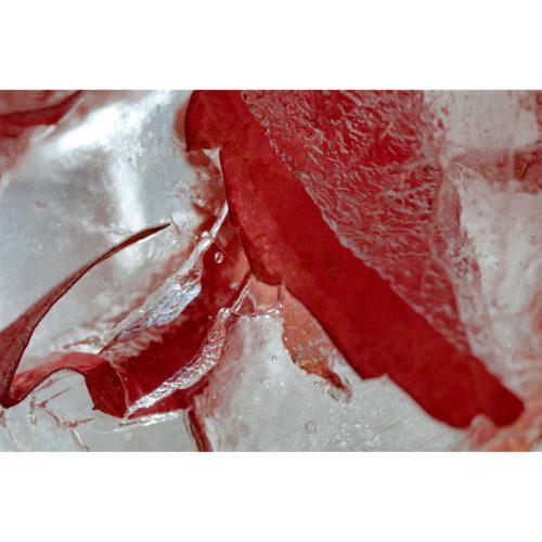 Weinblatt in Eis