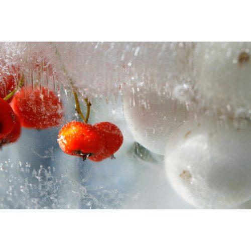 rote und weisse Beeren in Eis