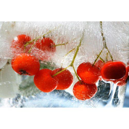 rote Beeren in Eis