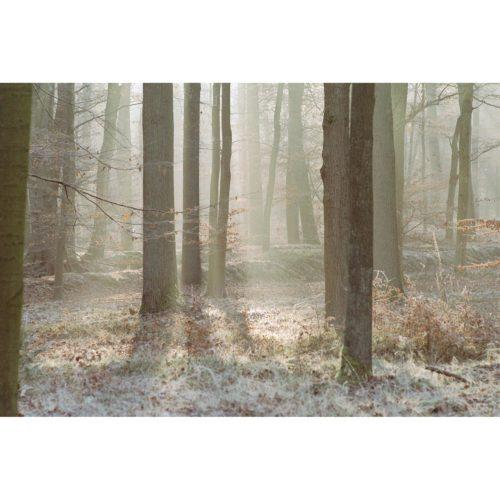 Wintersonne durch Bäume