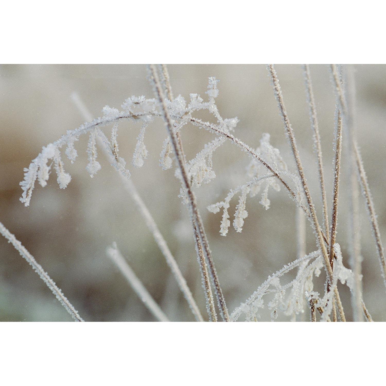 Gras mit Eis