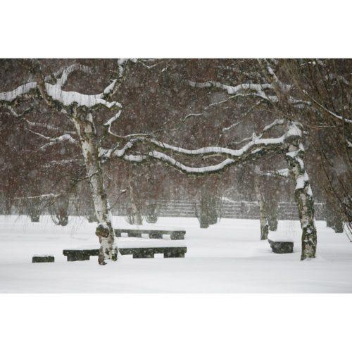 Winterlandschaft mit Birken